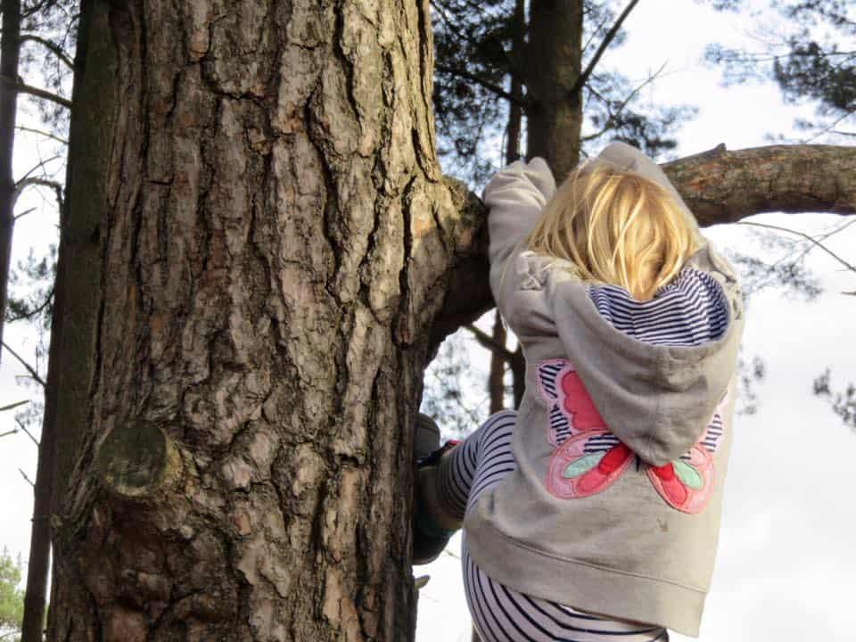 Tree Climbing
