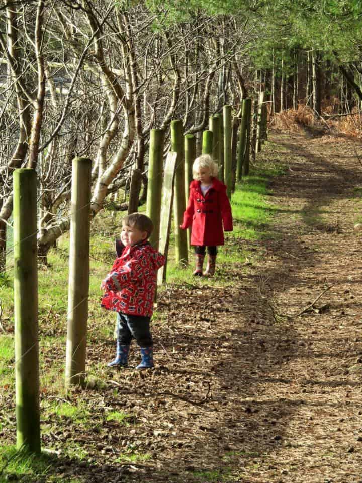 Avon Heath Country Park