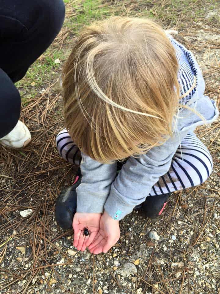 Beetle Hunting