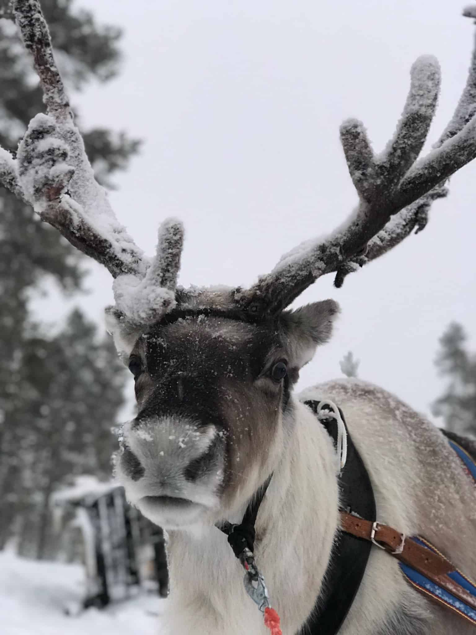 Searching for Santa at Santa's Lapland