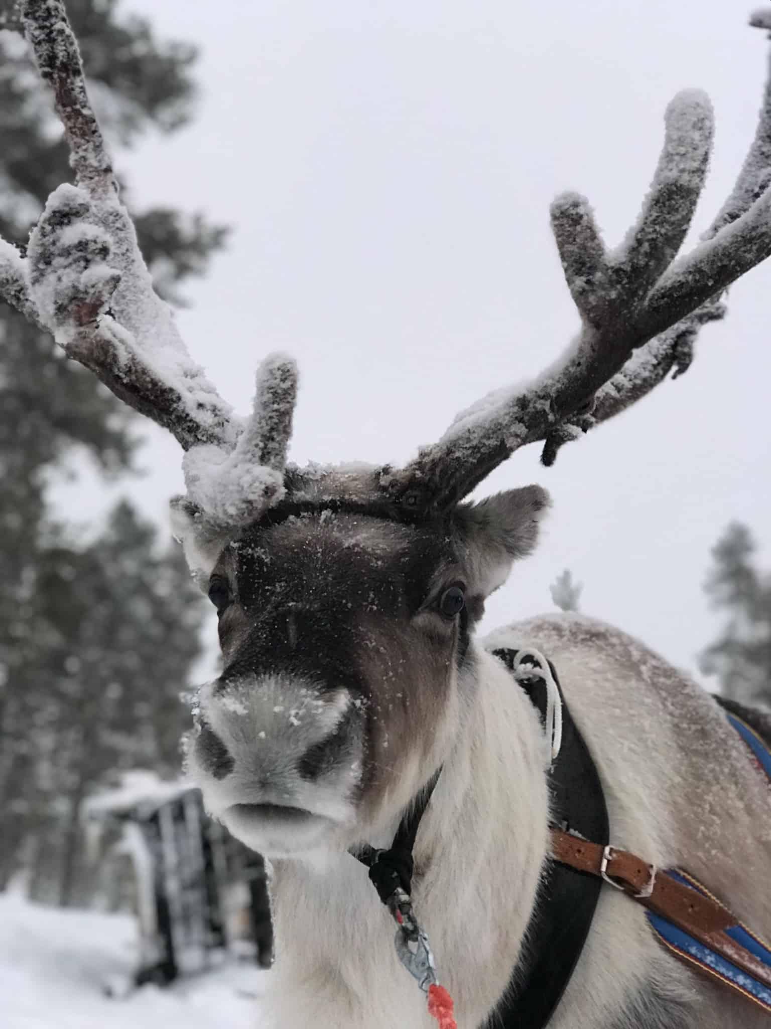 Searching for Santa at Santa's Lapland