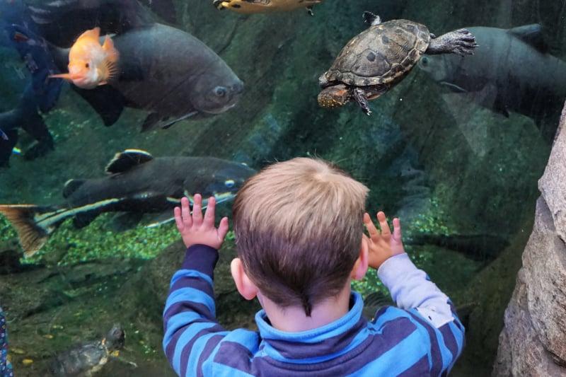Sebby Aquarium