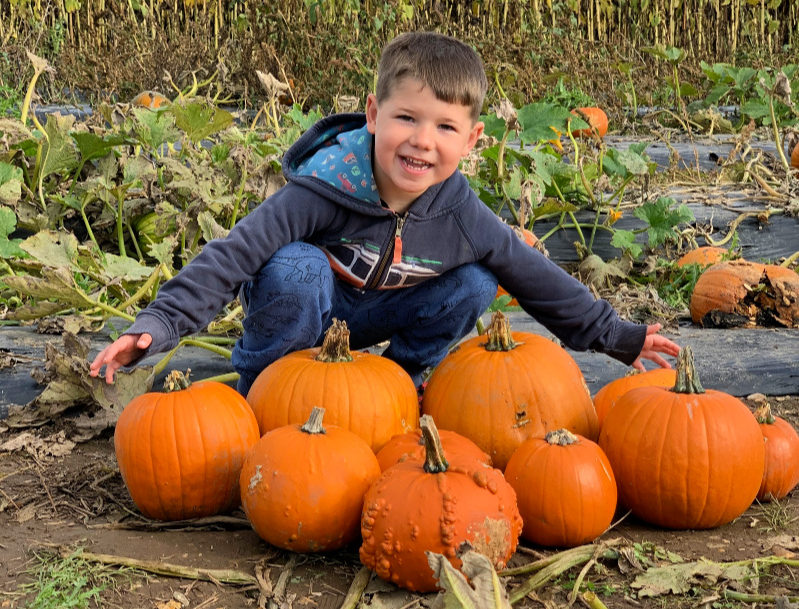 Pumpkins - Sebby