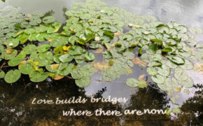 Love builds bridges