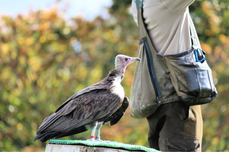 Vulture-1