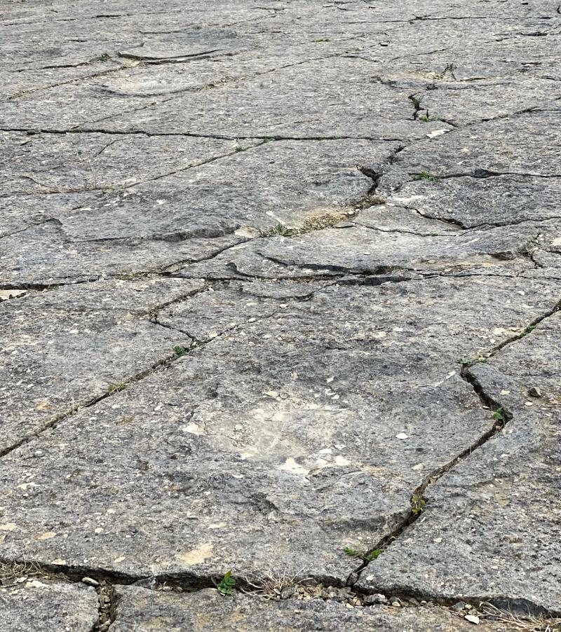 Dinosaur-footprints-Swanage