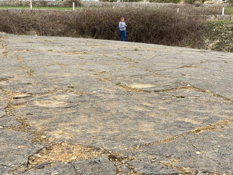 dinosaur footprints